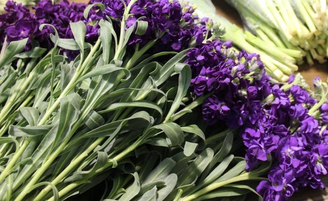 Purple Stock
